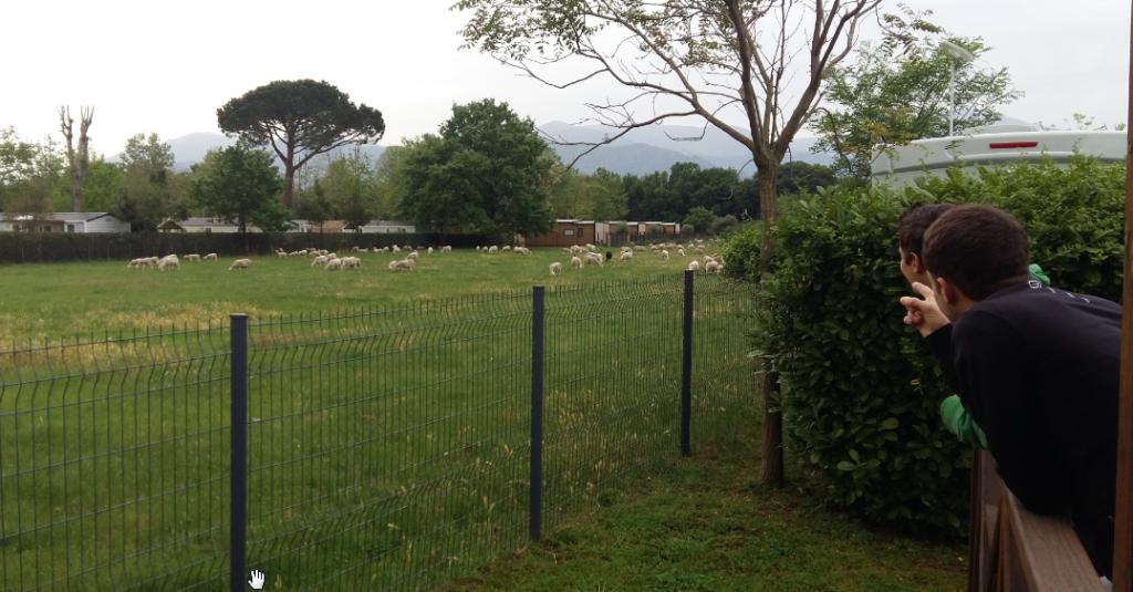 Jérôme et Corentin regardent les moutons